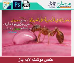 عکس نوشته مفهومی مورچه