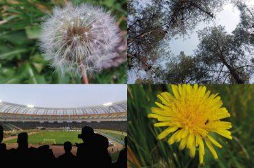 مجموعه عکس طبیعت